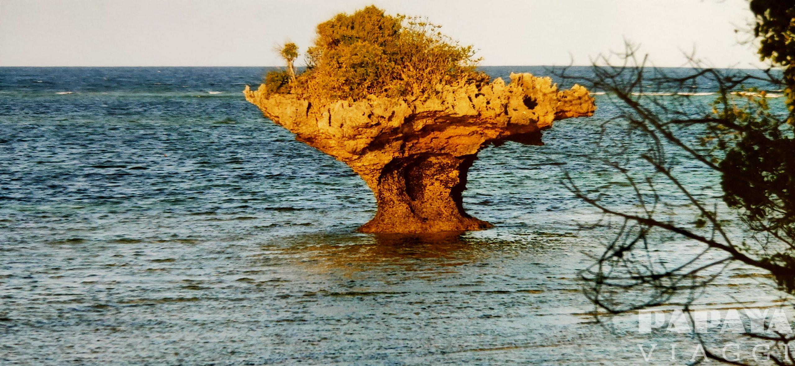 Kenya mare